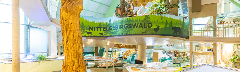 Museum - Breite Föhre