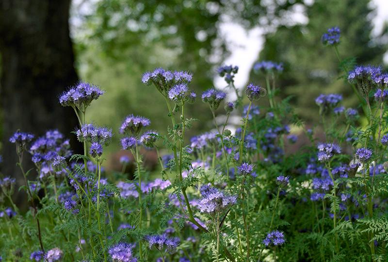 © Natur im Garten, Foto: Alexander Haiden