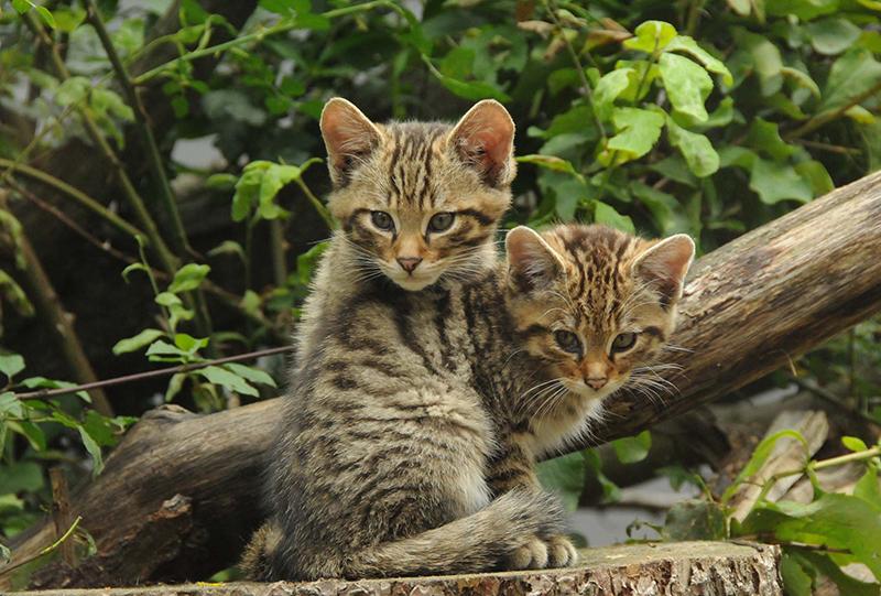 © Nationalpark Thayatal