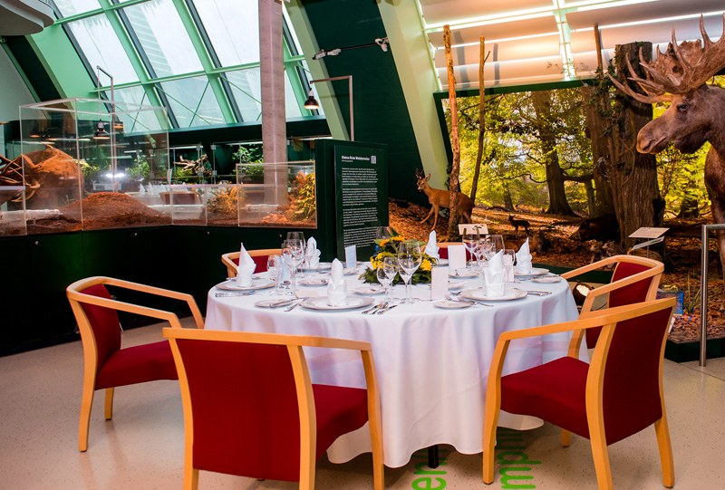 Gala Dinner at Haus für Natur © NÖ Museum Betriebs GmbH, Foto: Helmut Lackinger