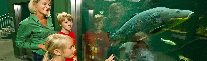 Museum as Zoo